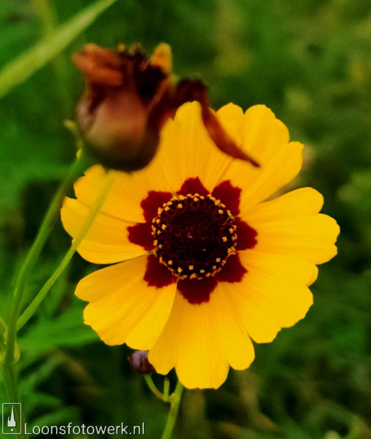 Bloemenpracht industrieterrein De Hoogt 16