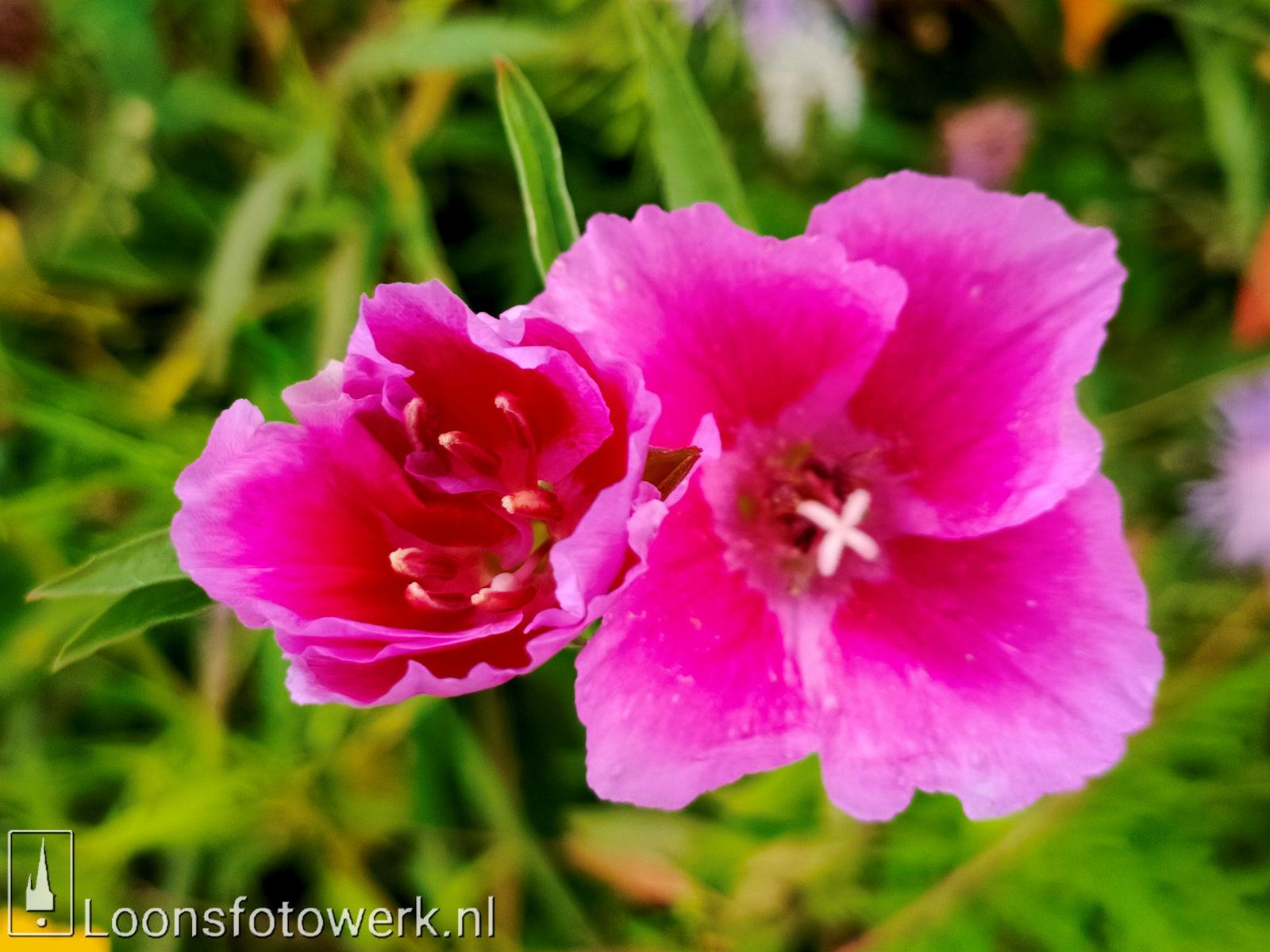 Bloemenpracht industrieterrein De Hoogt 23