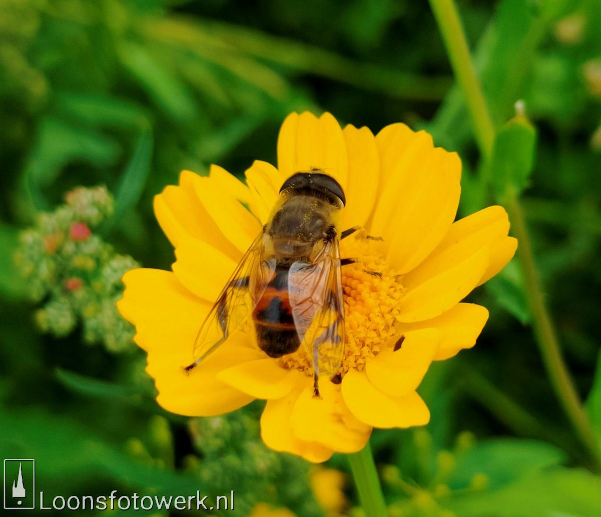 Bloemenpracht industrieterrein De Hoogt 26