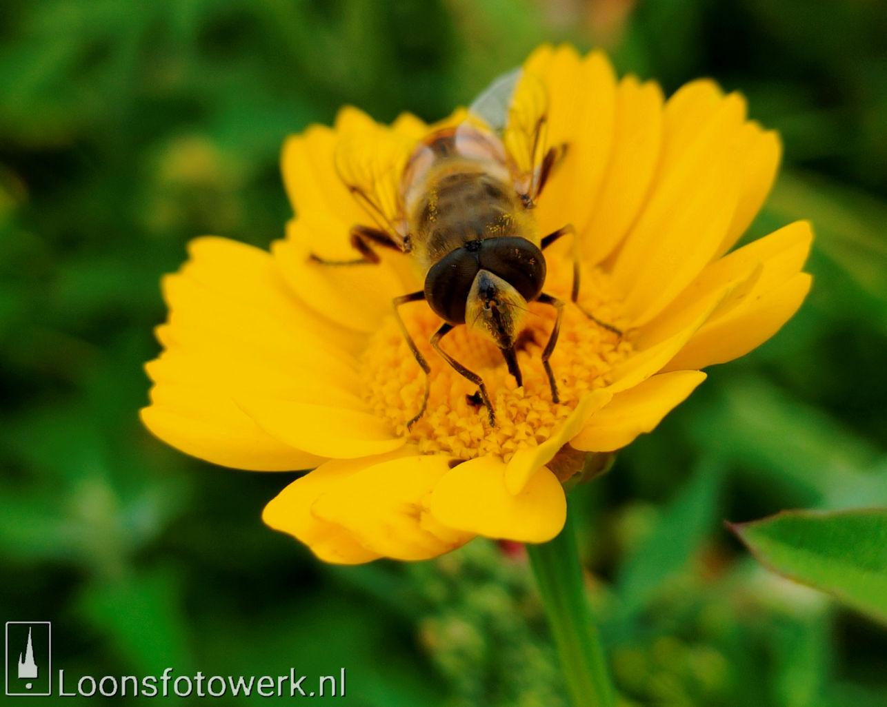 Bloemenpracht industrieterrein De Hoogt 27