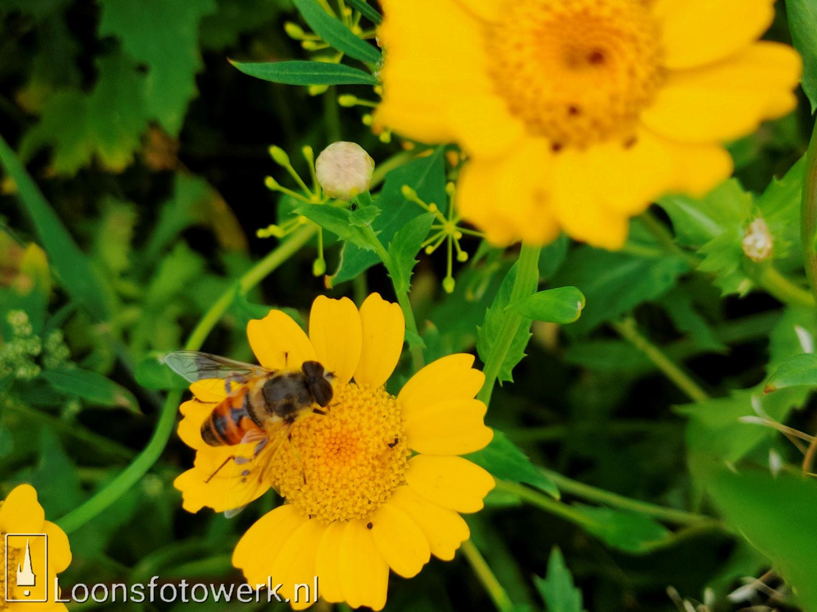 Bloemenpracht industrieterrein De Hoogt 28