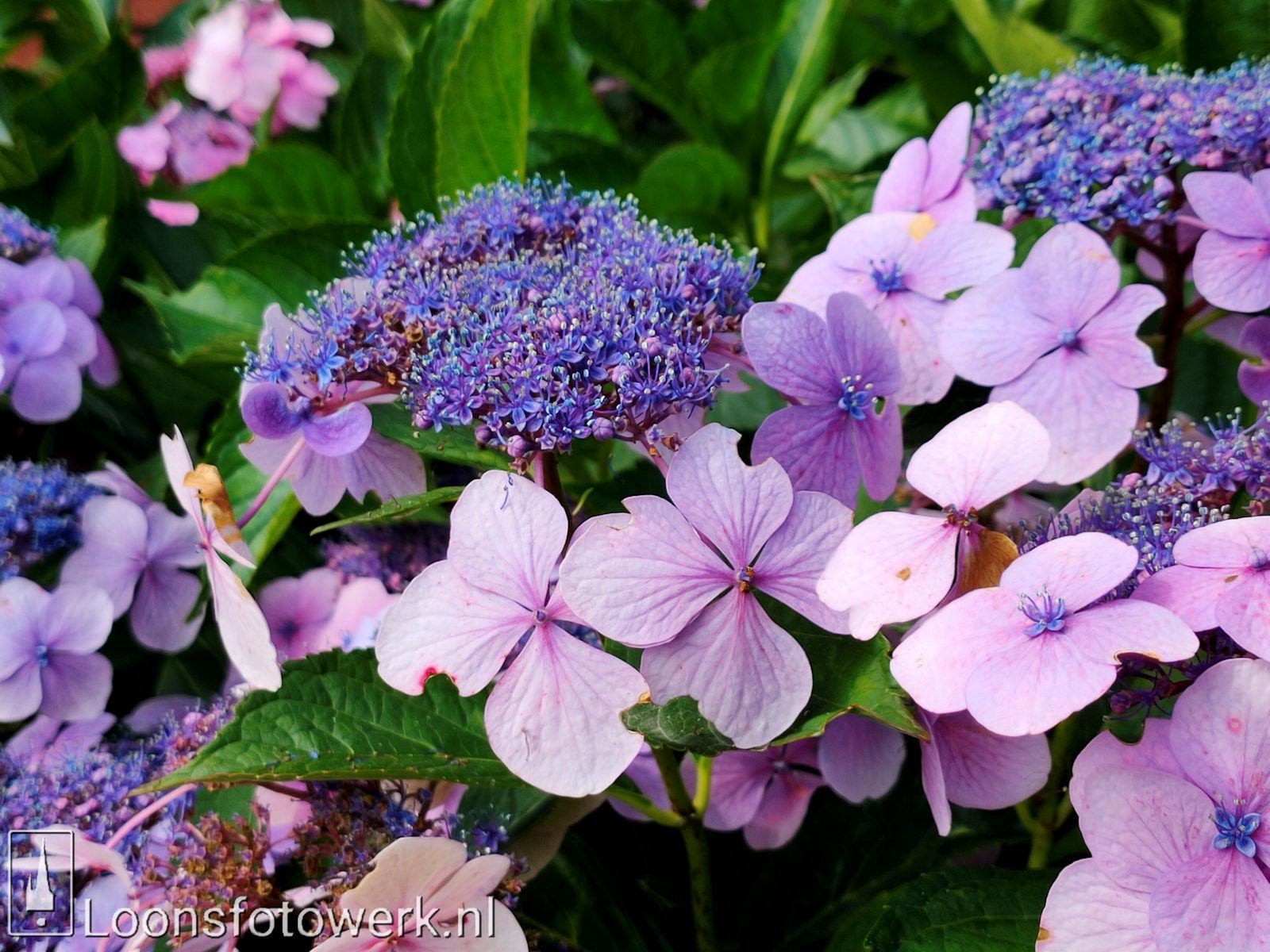 Bloemenpracht industrieterrein De Hoogt 30