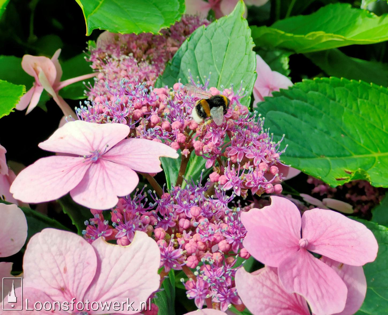 Bloemenpracht industrieterrein De Hoogt 31