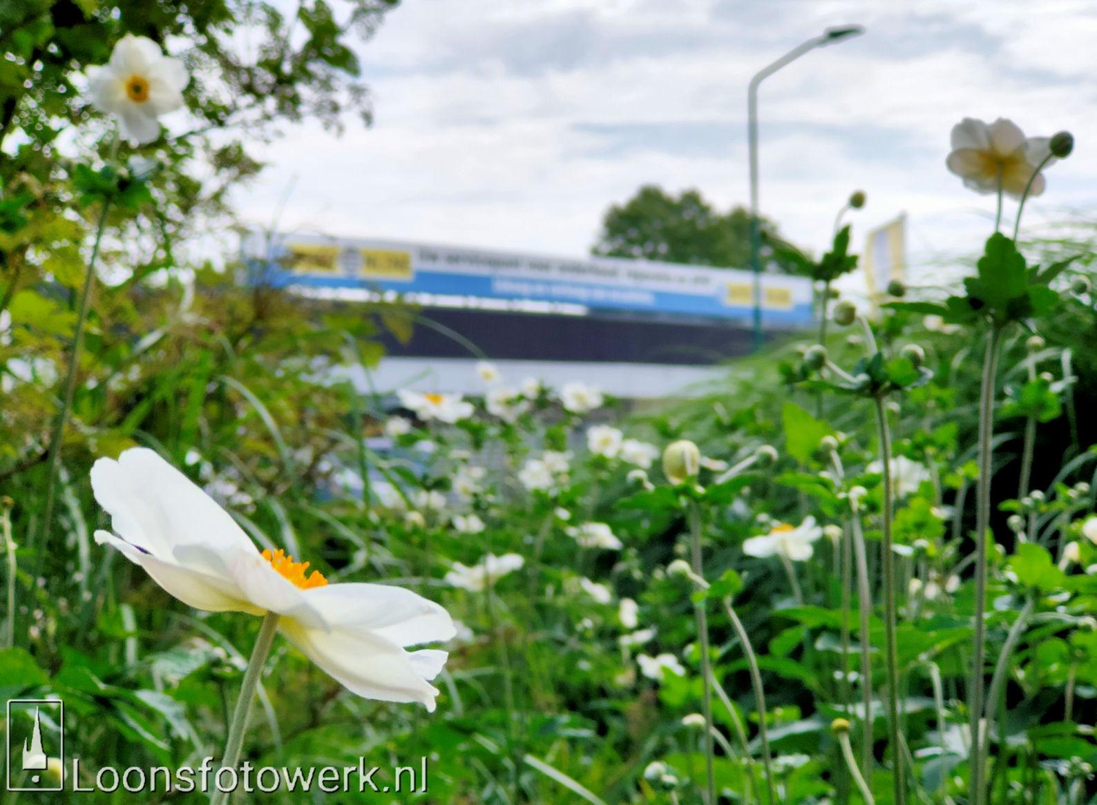 Bloemenpracht industrieterrein De Hoogt 32