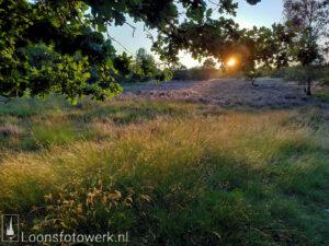 zonsondergang heide Loonse en Drunense Duinen