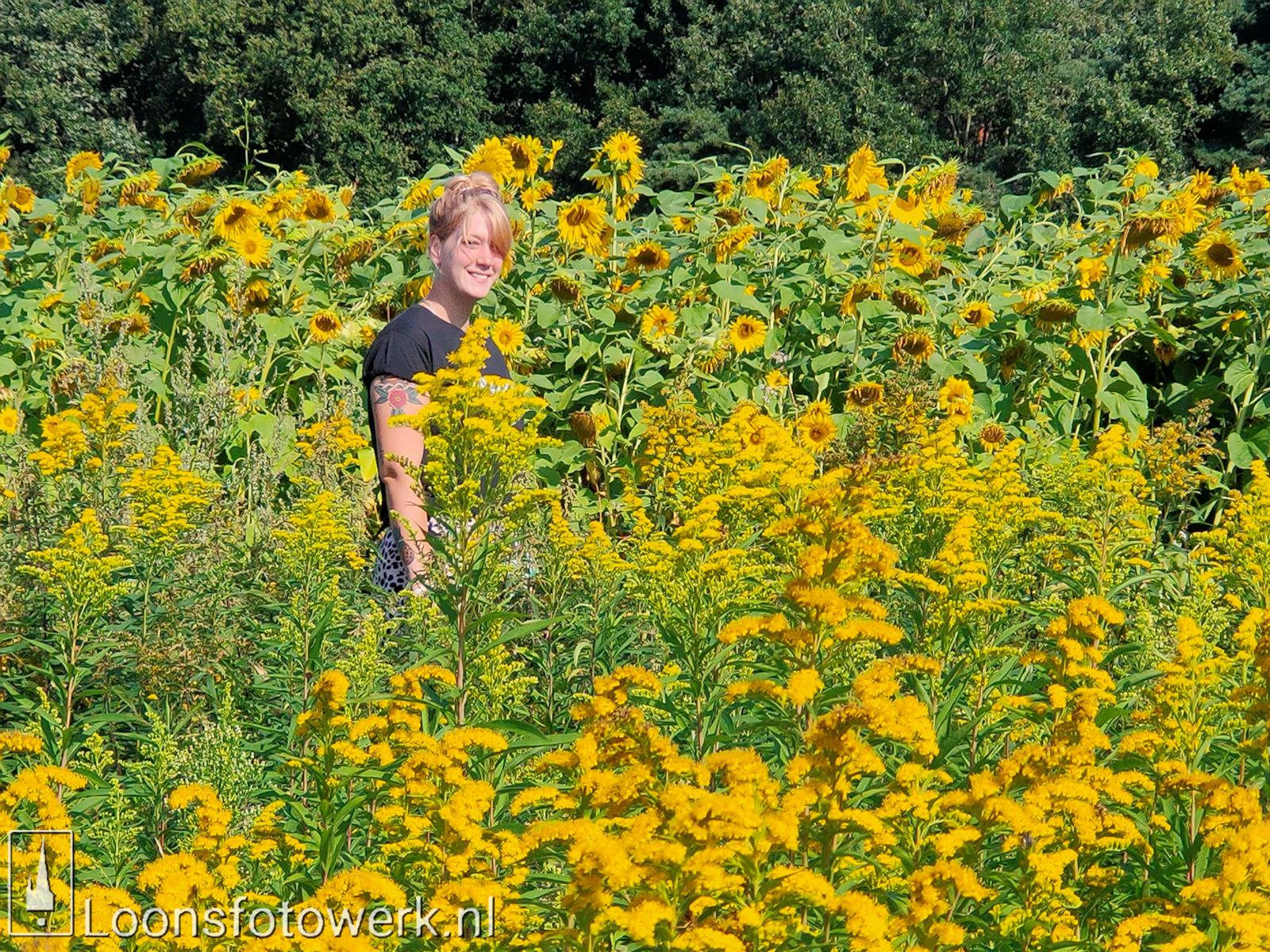 Zonnebloemen Duiksehoef 9