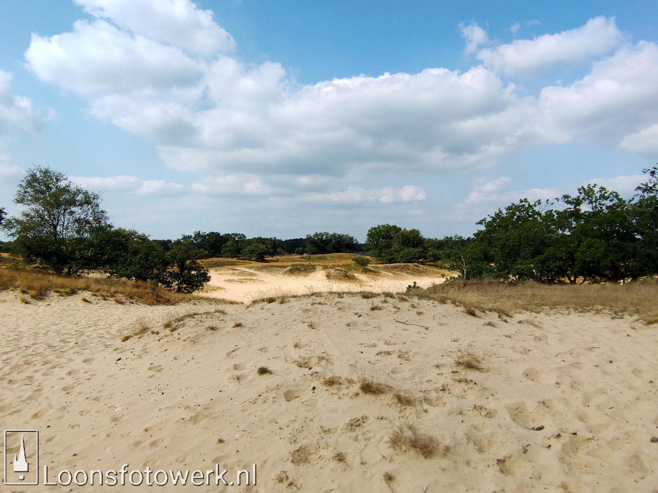 Heide Loonse en Drunense Duinen 26