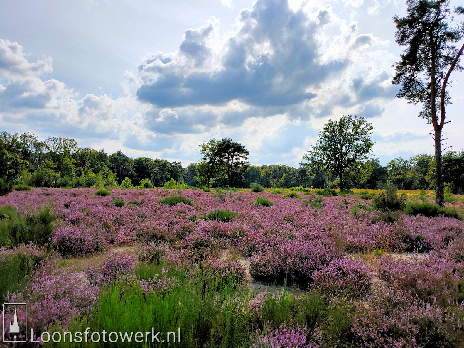 Heide Loonsche Land