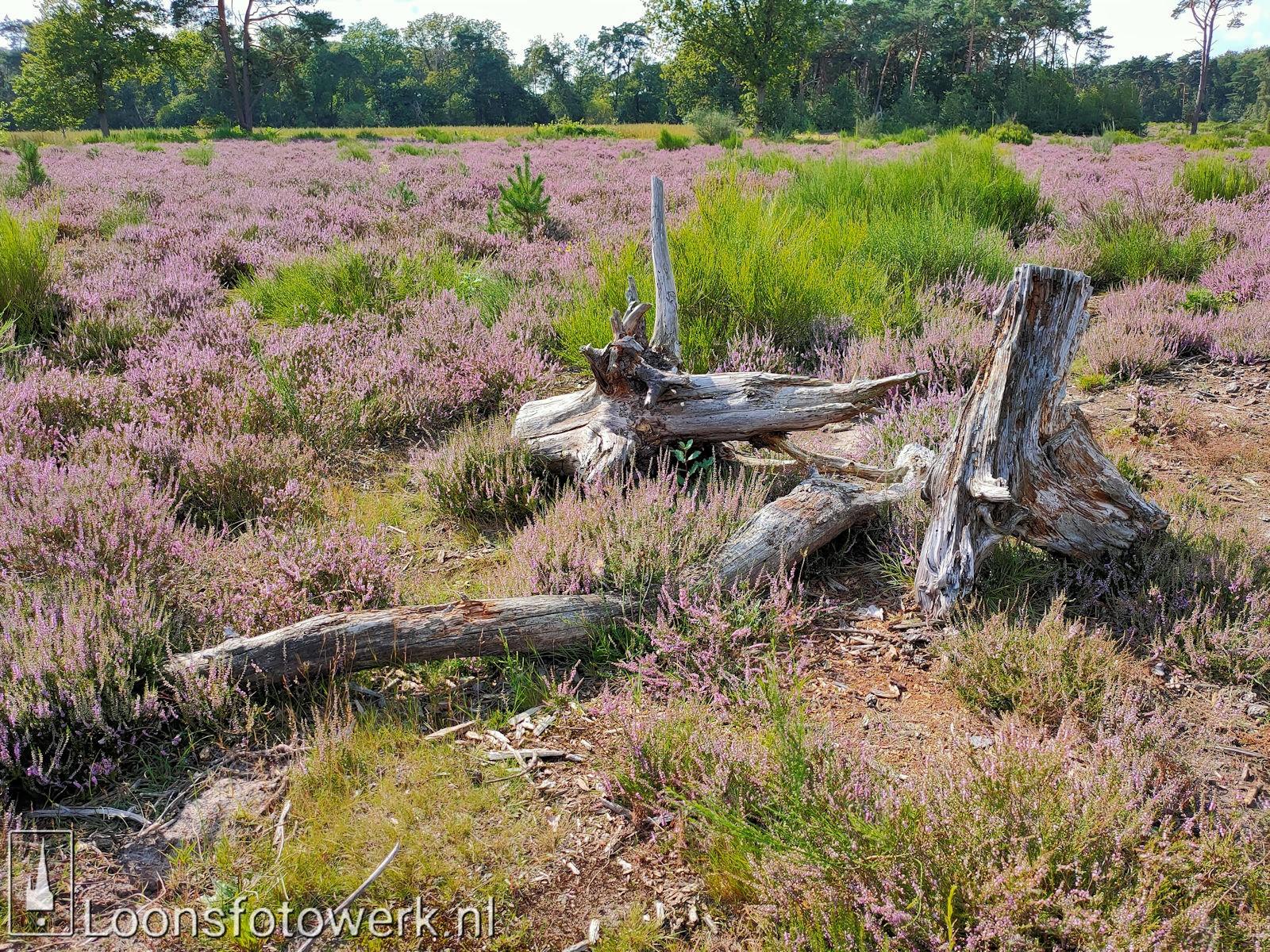Heide 't Loonsche Land 8