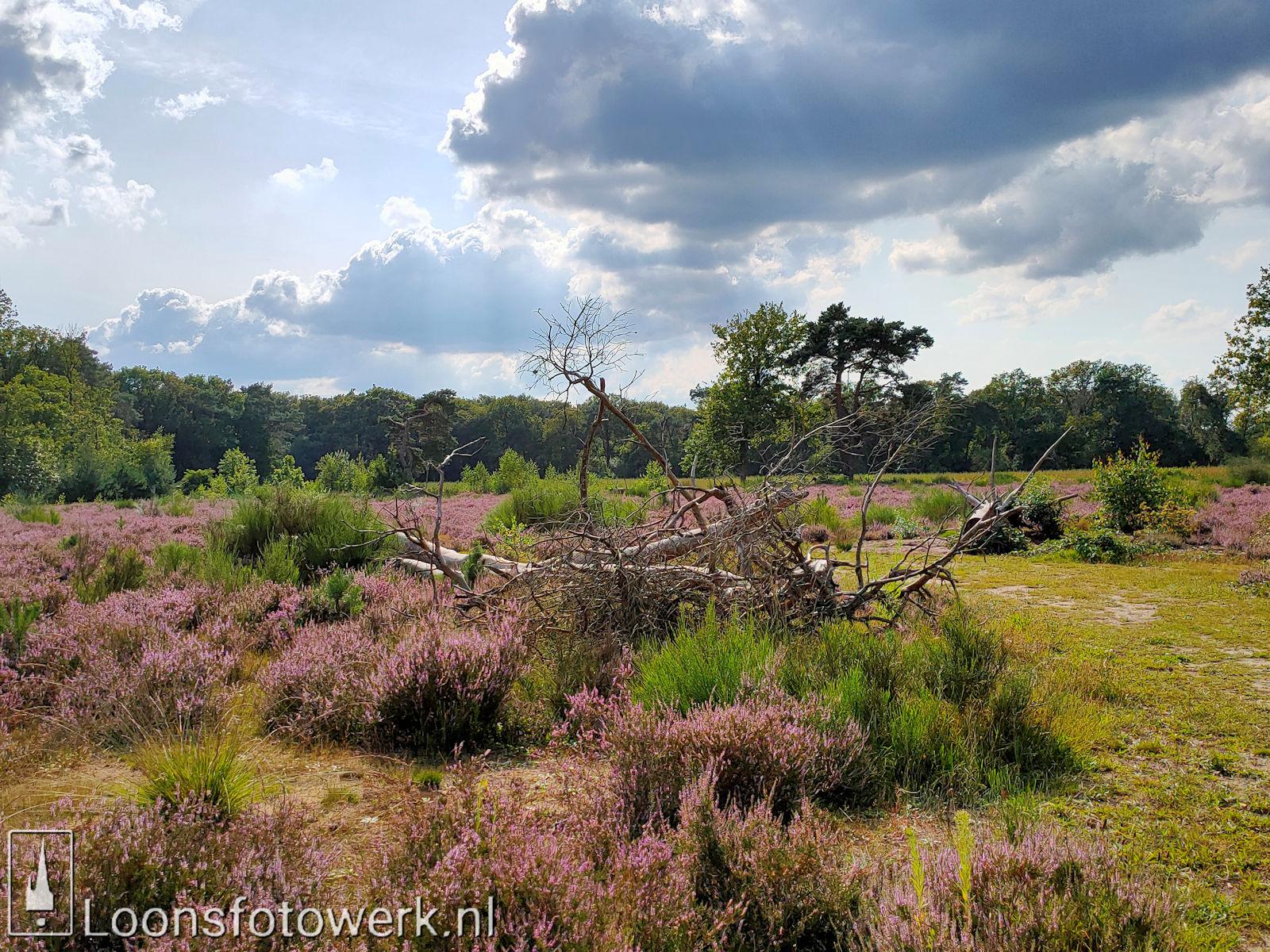 Heide 't Loonsche Land 19