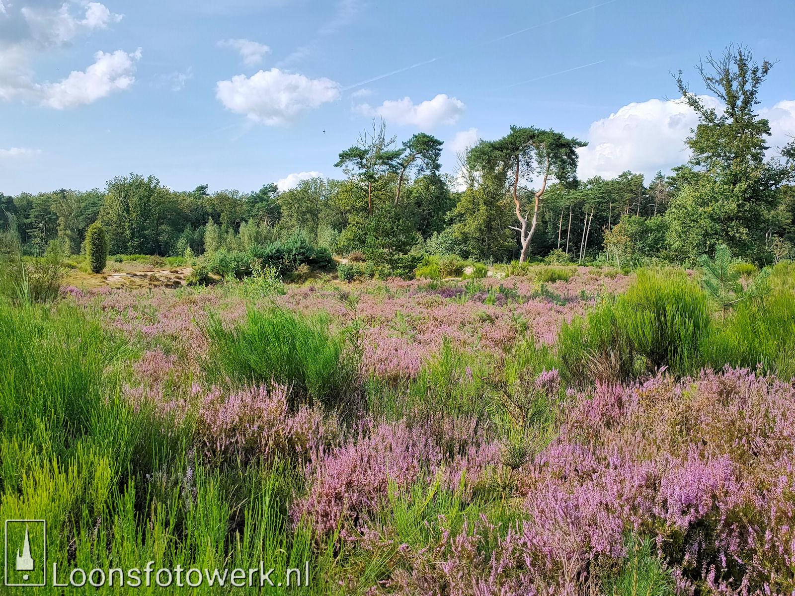 Heide 't Loonsche Land 20