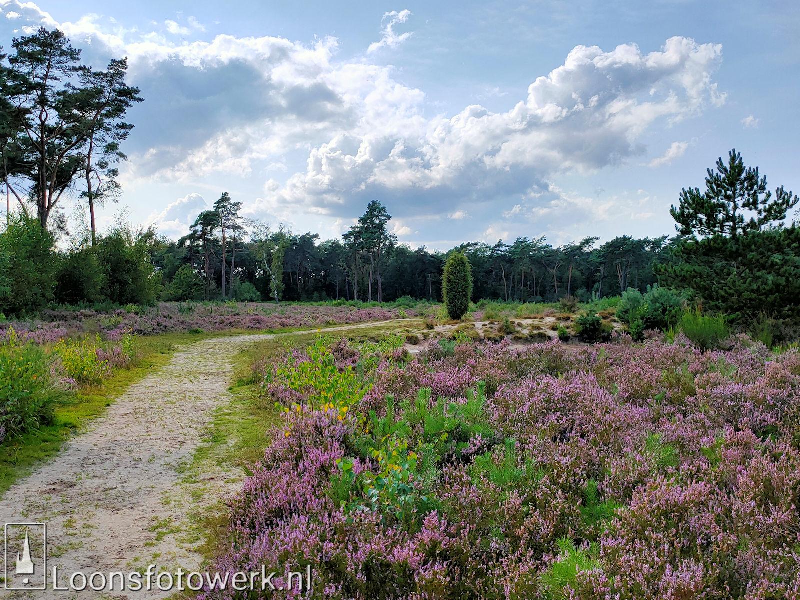 Heide 't Loonsche Land 22