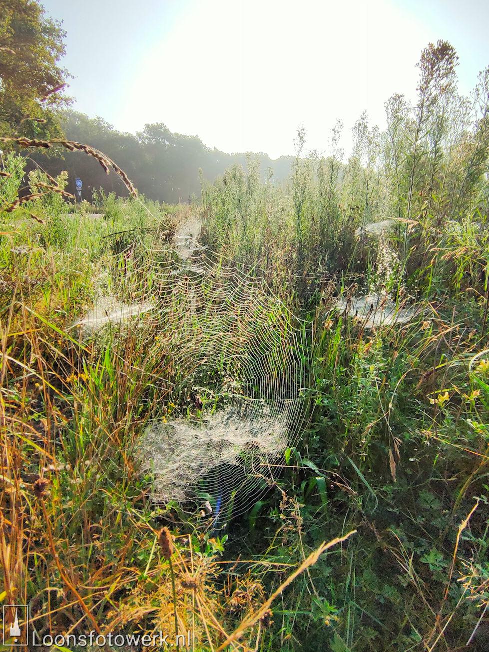 Spinnenwebben Moleneind 1