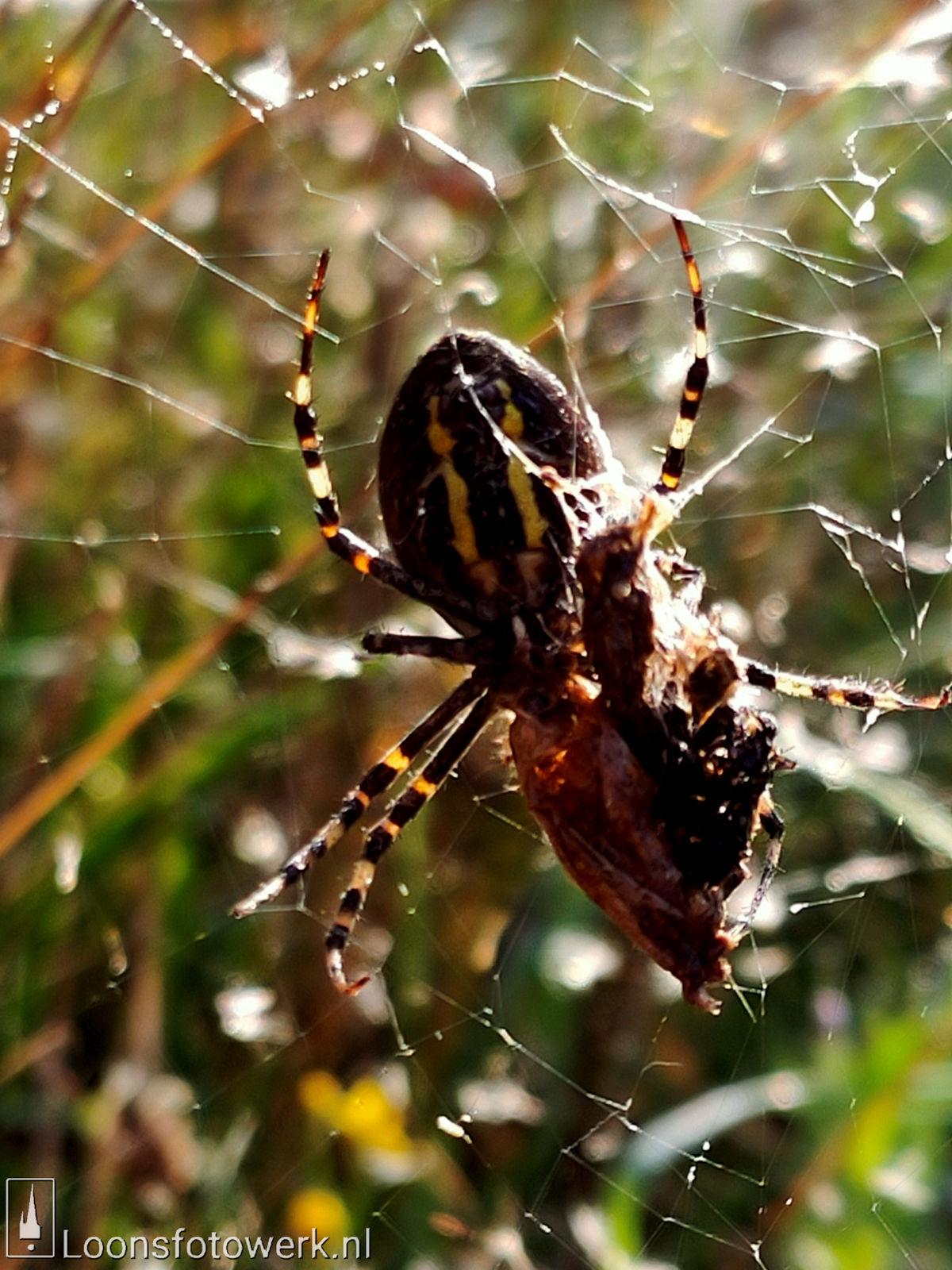 Spinnenwebben Moleneind 2