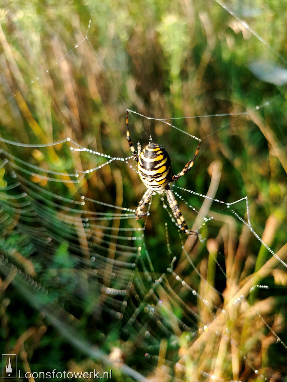 Spinnenwebben Moleneind 3