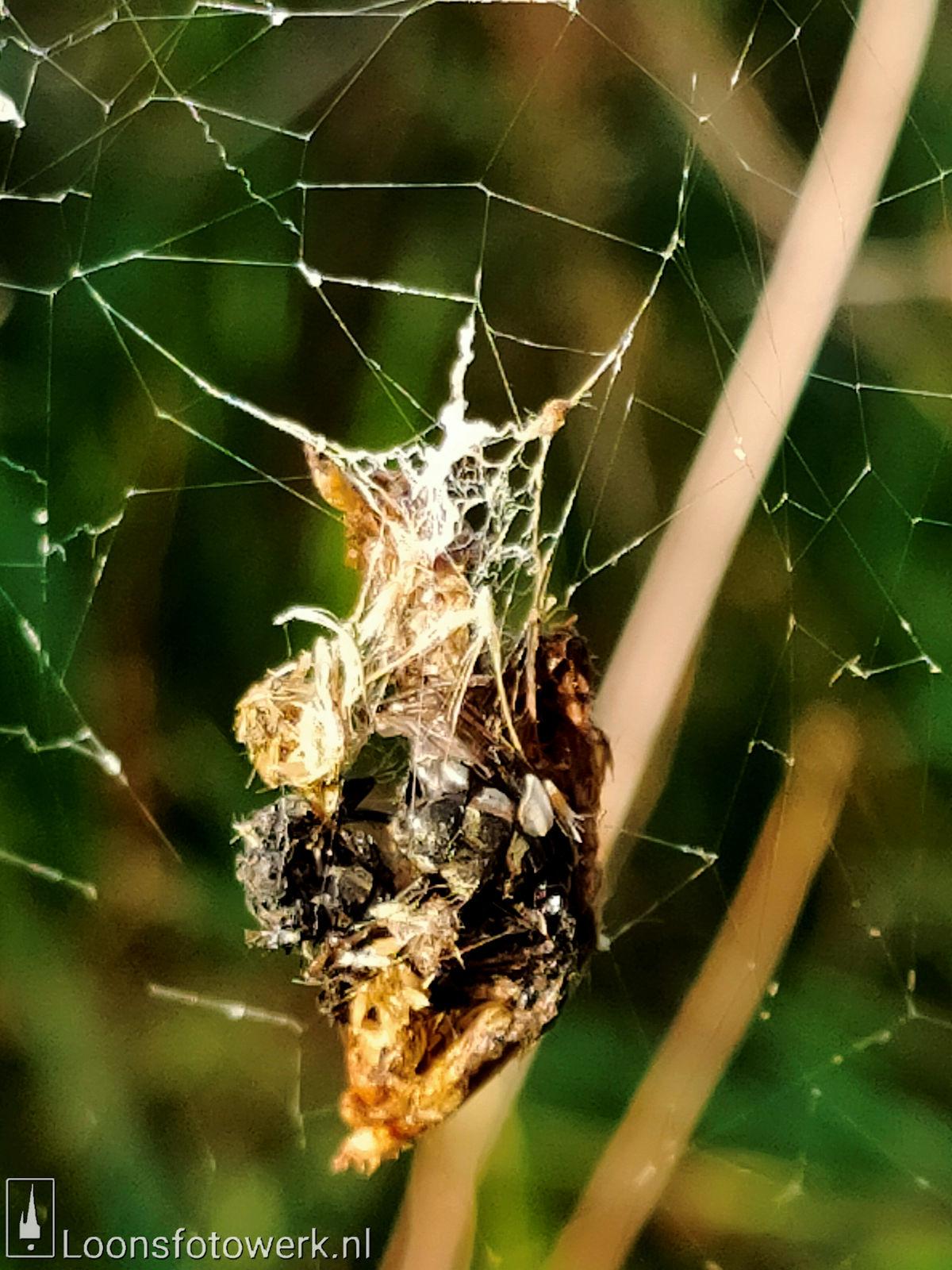 Spinnenwebben Moleneind 4