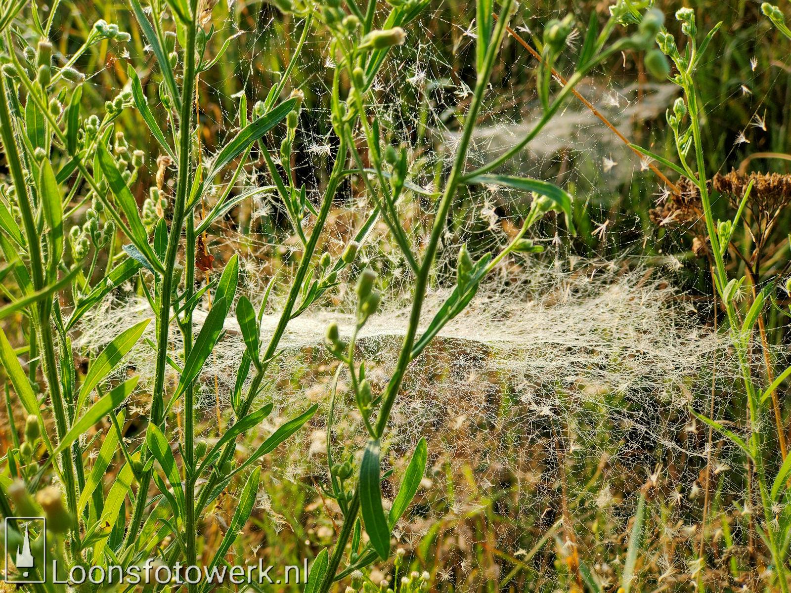 spinnenwebben Moleneind