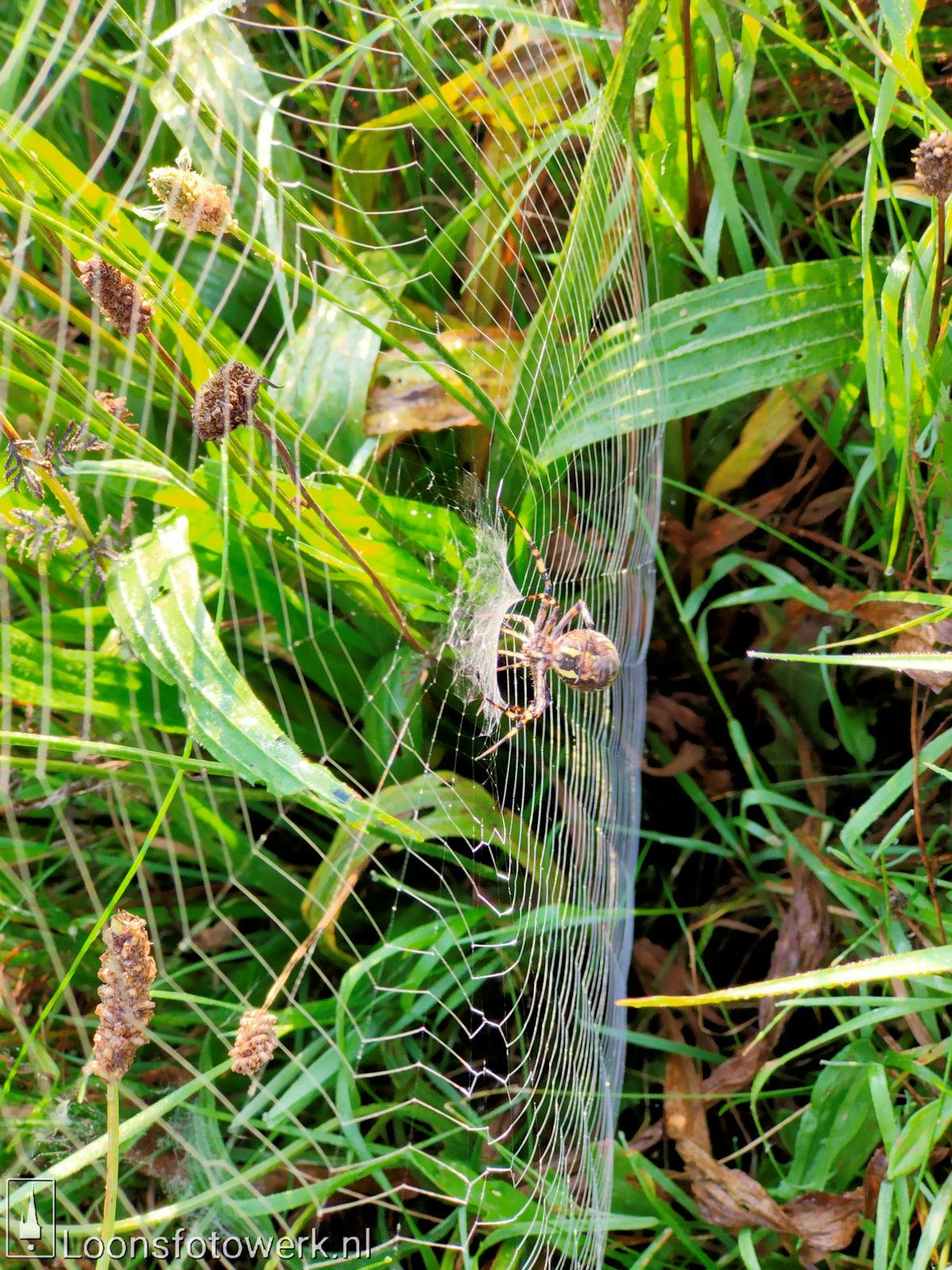 Spinnenwebben Moleneind 5
